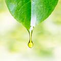 Aromaterápia a légúti fertőzések ellen