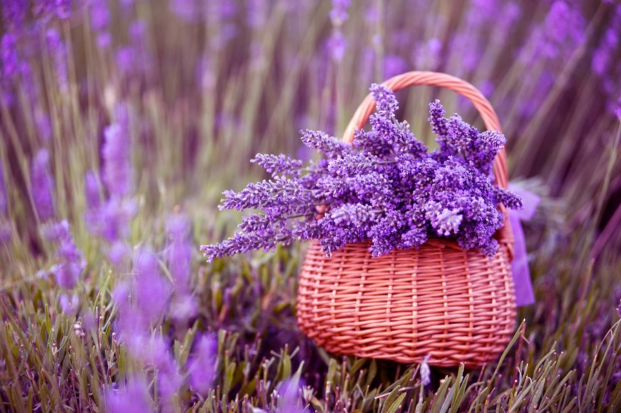 basket-of-lavenders-1725082-1239x824.jpg