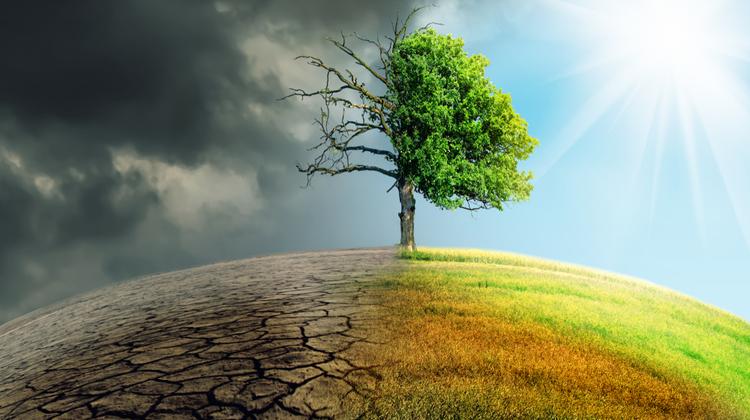 5+1 hasznos tipp a fenntartható(bb) környezetért