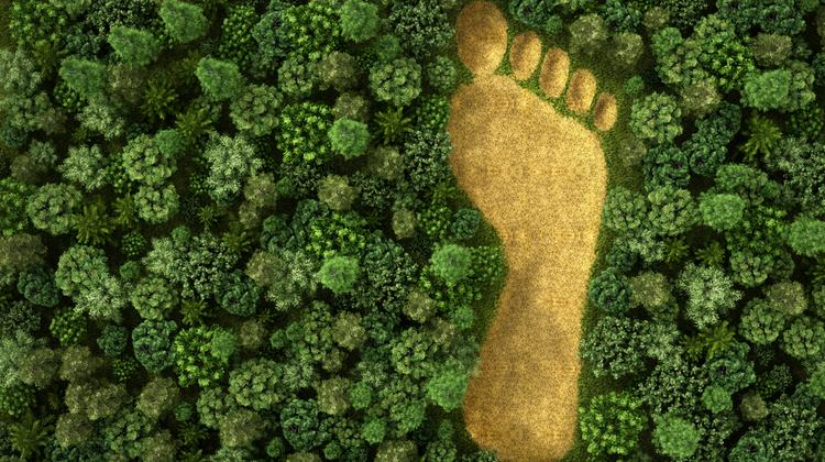 Meg lehet-e teljesen szüntetni az ökológiai lábnyomot?