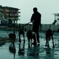 Dogman, Silvio – és a többiek