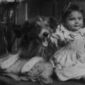 Rover, a kutya