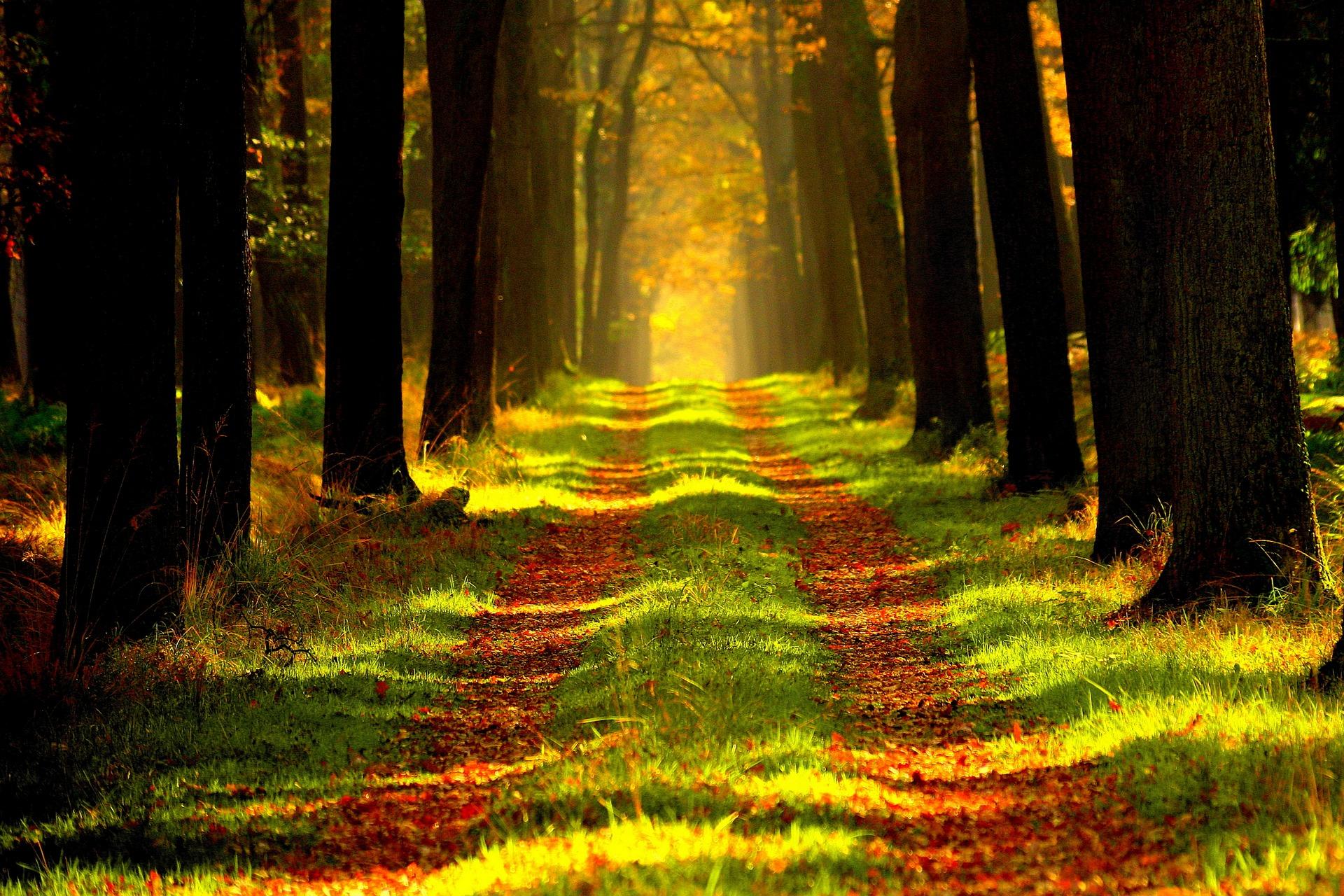 forest-868715_1920.jpg