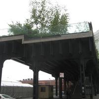 Fű a sínek között
