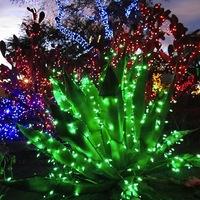 Karácsonyi kaktuszok