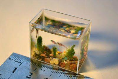 World Smallest Aquarium by Anatoly Konenko.jpg