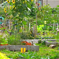 Csatlakozz közénk, közösségi kertet építünk a Duna-parton!