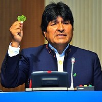 Bolívia fellázad a koka-tilalom ellen