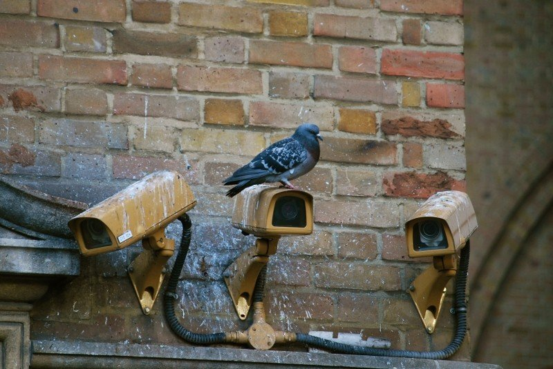 camera-spy-pigeon-surveillance-security-video_2.jpg