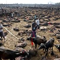 Az állatirtó hindu vallásfesztivál