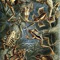 Ernst Haeckel: Az Univerzum rejtélye