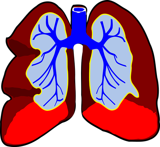 lungs-39980_480.png