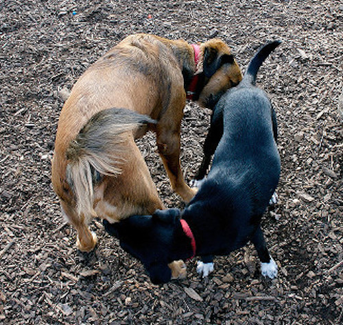 dogs-butts-circle.jpg