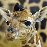 A Fővárosi Állatkert a legbarátságosabb adatgazda