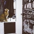 Lulu egy géniusz - így nyitja ki a macska az ajtót