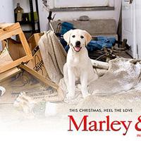 Marley és én - Egy aranyos mindennapos történet