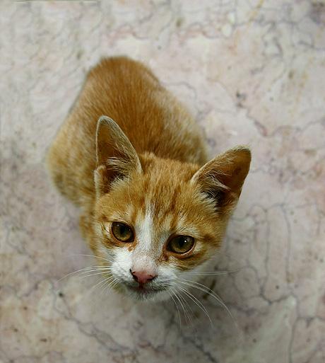 Vilmos, egyelőre még csak Vili, de lehet, hogy később Cili - új macsek a háznál
