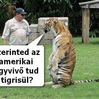 Ne a tigrisek tanuljanak angolul. Az amerikaik tanuljanak tigrisül...