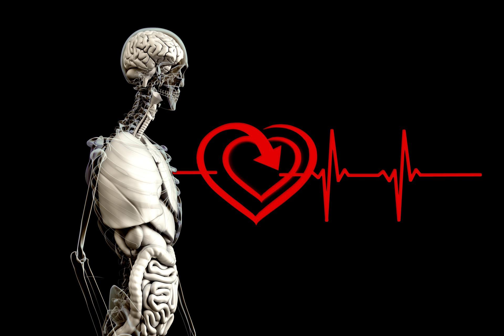anatomy-2328534_1920.jpg