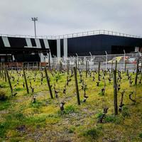 Egy repülőtér, ahol szőlőt termesztenek