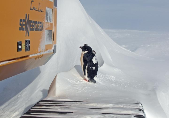 Sennebogen 643 pingvin
