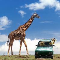 Zsiráfot az autóba!