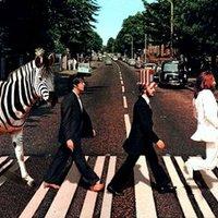 Ismét a zebrákról
