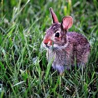 A nyuszi húsvéti kívánsága