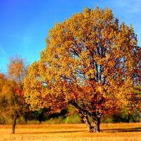 Mondóka az őszi csodákról