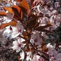 Tüsszögő tavasz