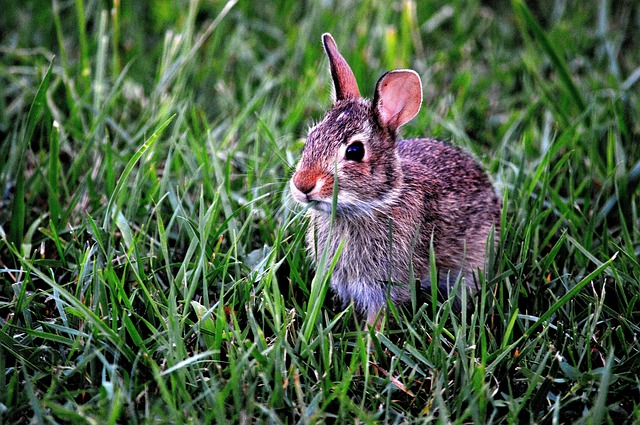 bunny-183301_640.jpg