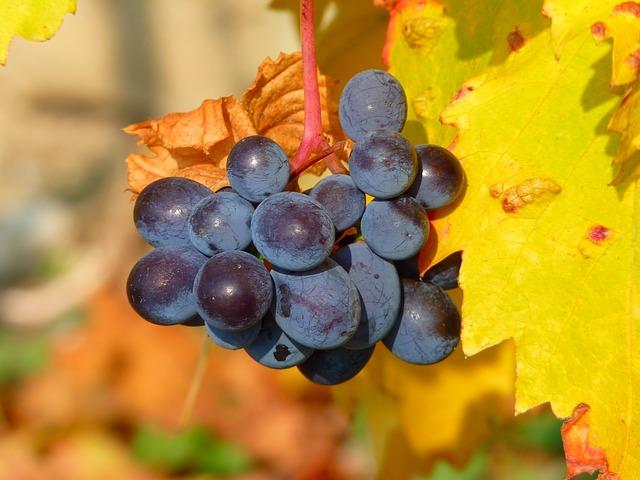 grape-11775_640.jpg