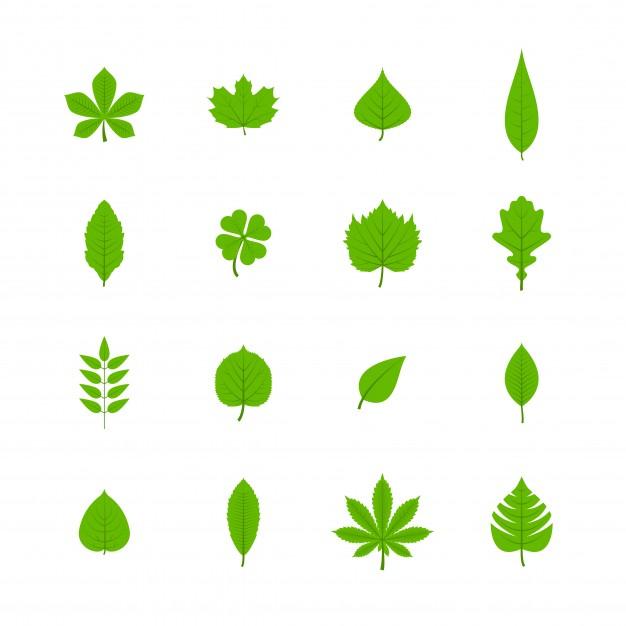 levelek.jpg