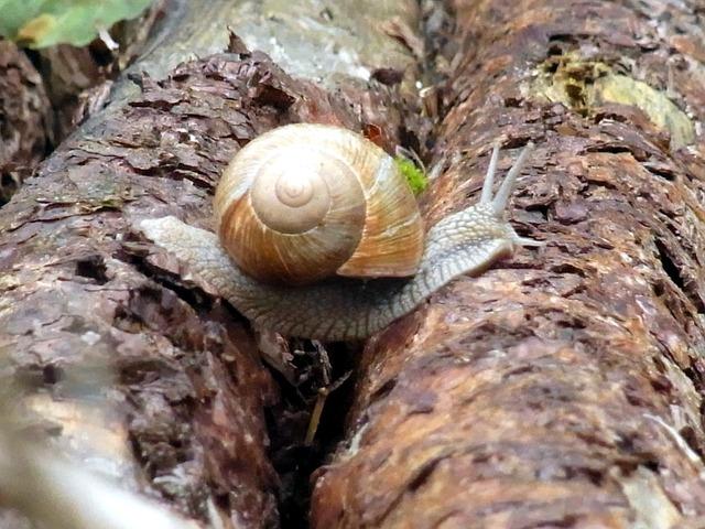 snail-56990_640.jpg