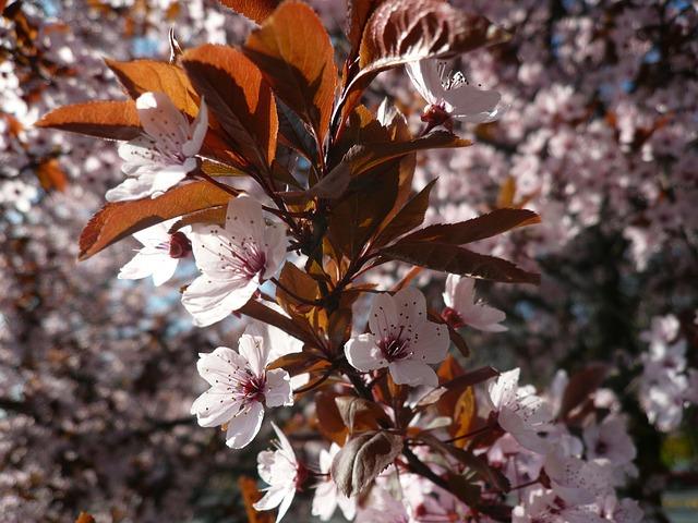 spring-196366_640.jpg