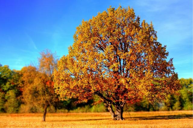 tree-99852_640.jpg