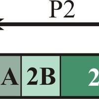 A nem-strukturális fehérjék funkcióinak áttekintése