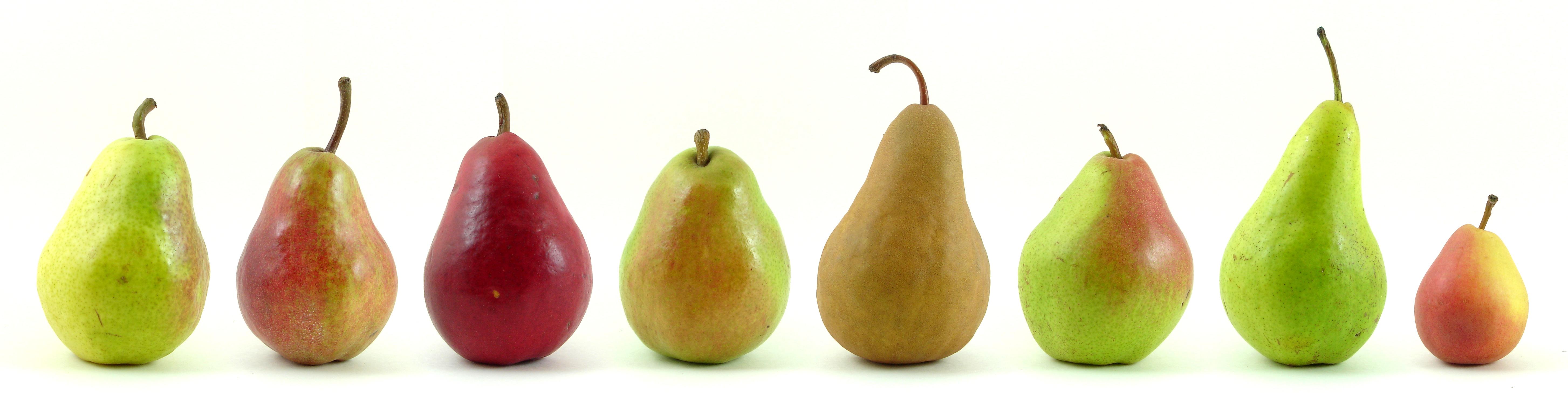 Eight_varieties_of_pears.jpg