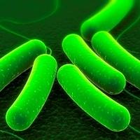 Zsír helyett biodízelt termel a kólibaktérium