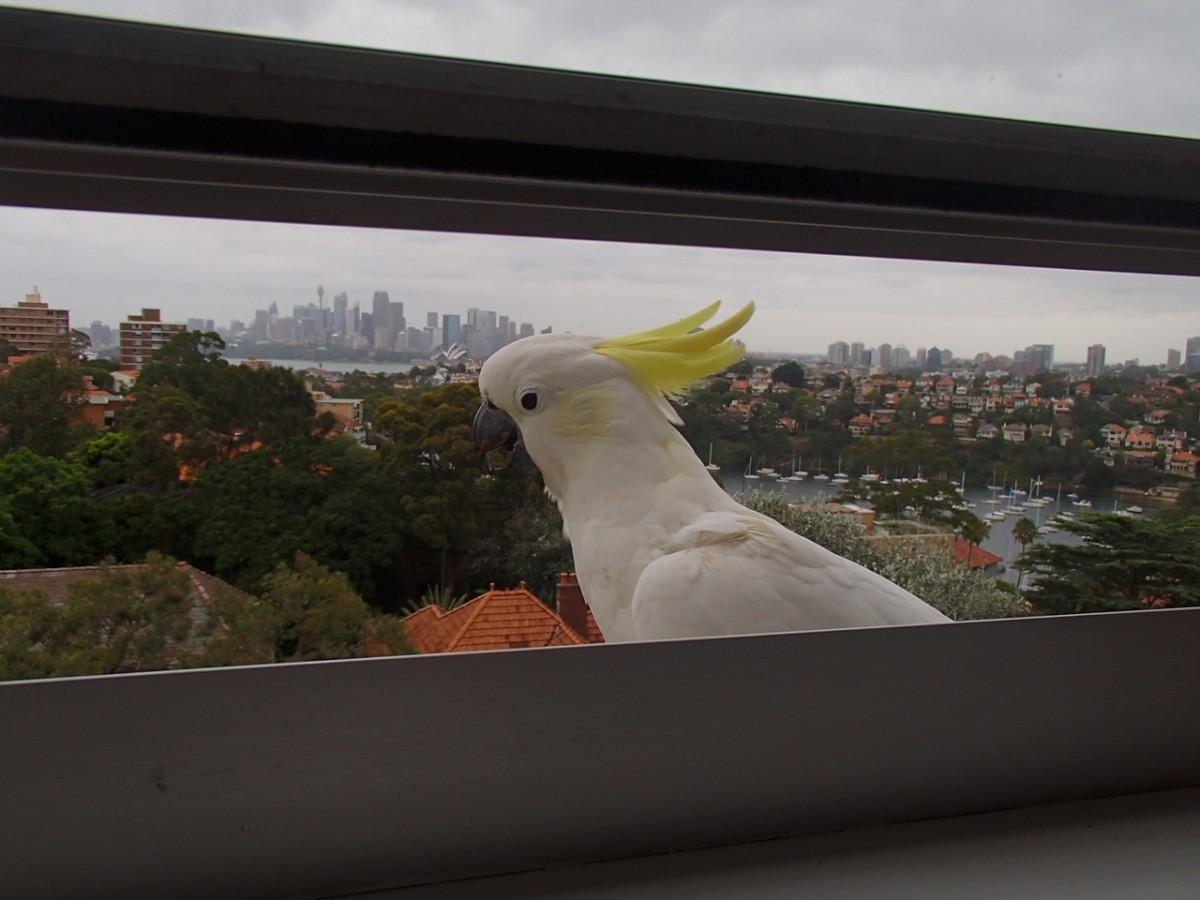 A büszke madár