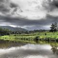 2013. április 27-május 1.: 13 vadelefánt és egy királykobra (többek között). Azaz dzsungeltúra az Earth Lodge-ban, az Ulu Muda-i esőerdőben, Malajzia