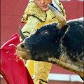 Ollé! Toro, toro!