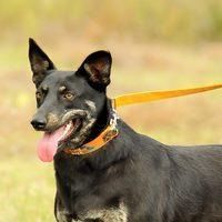 Kacat, Malőr és 108 kutya készül a Luca napra