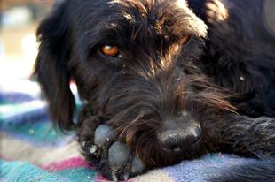 Átmenet az  állatkínzás és a rossz tartás között…