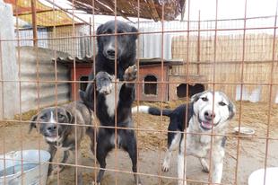 A sintértelep láttán kezdte menteni a kutyákat