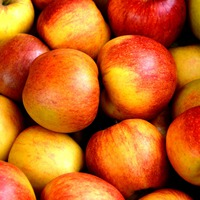 Az alma nyomában