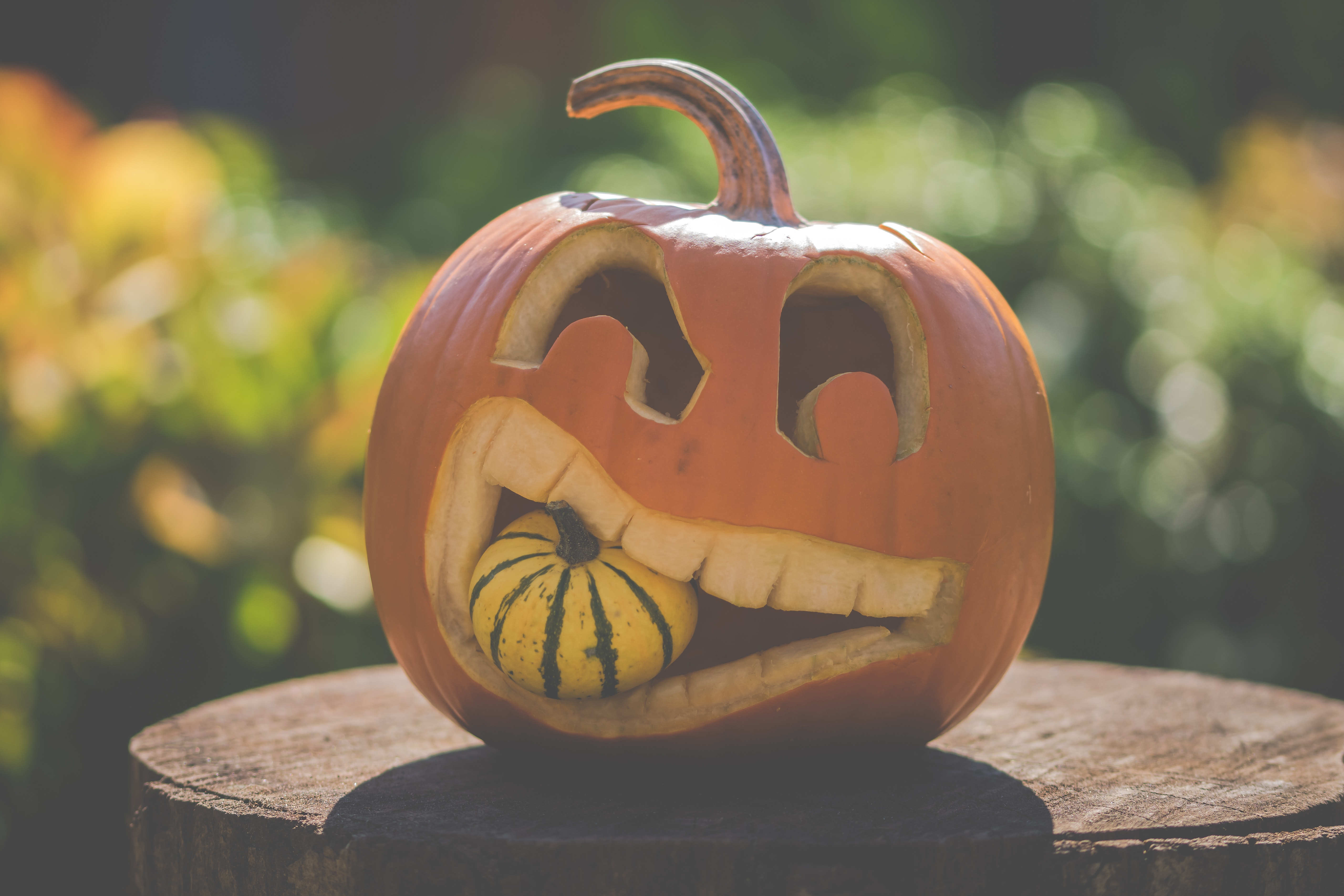 autumn-carve-decoration-1456120.jpg
