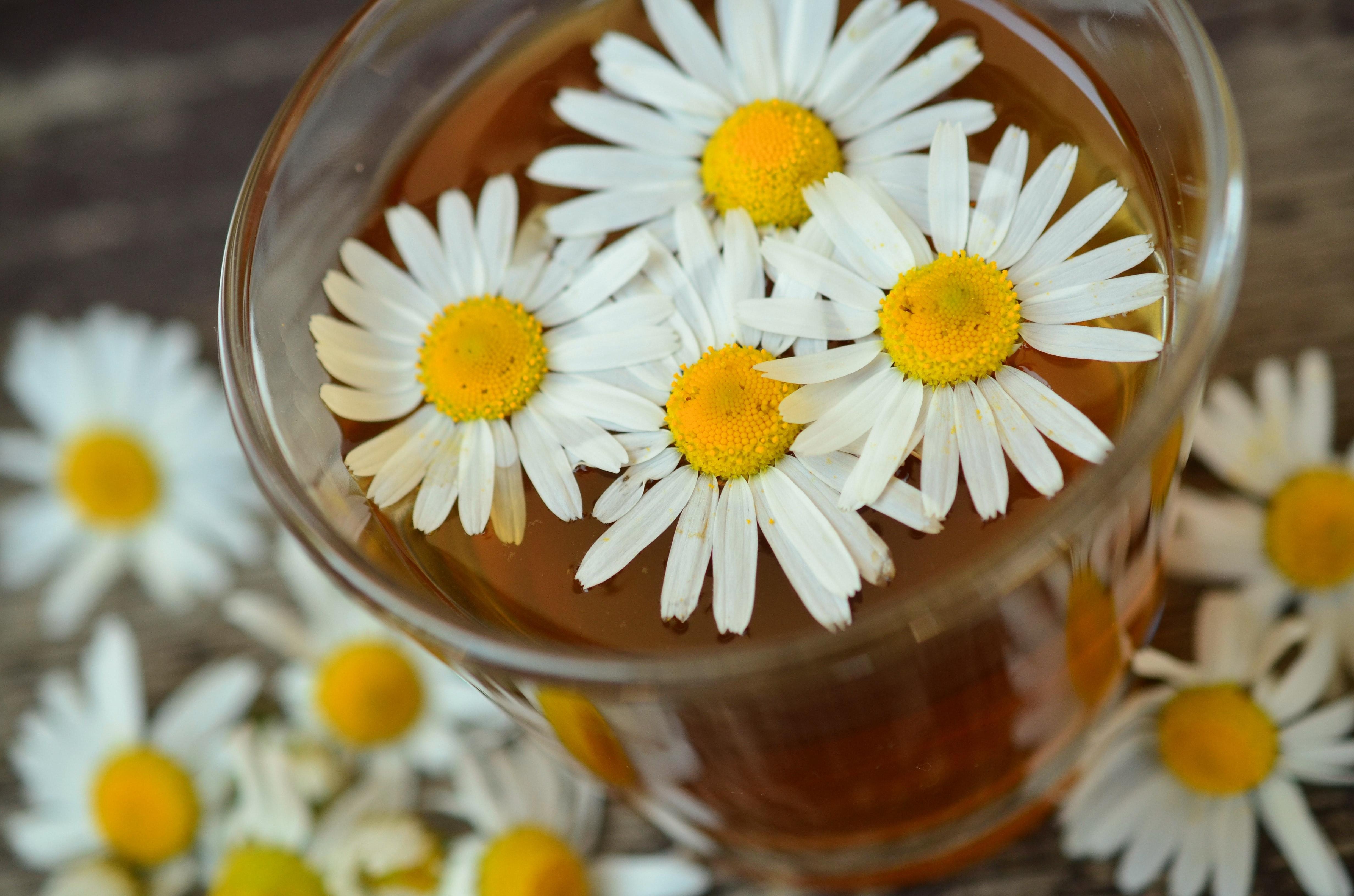 beverage-bloom-blossom-34696.jpg