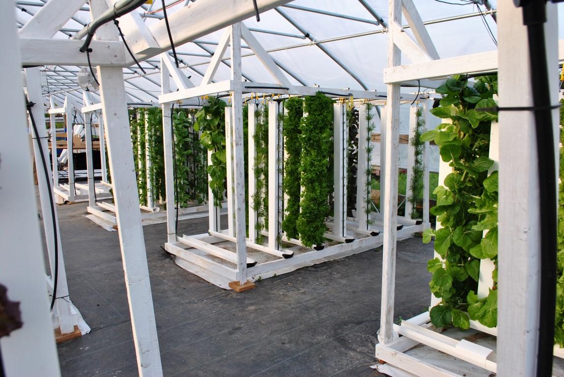 hydroponic_vertical_farm.jpg