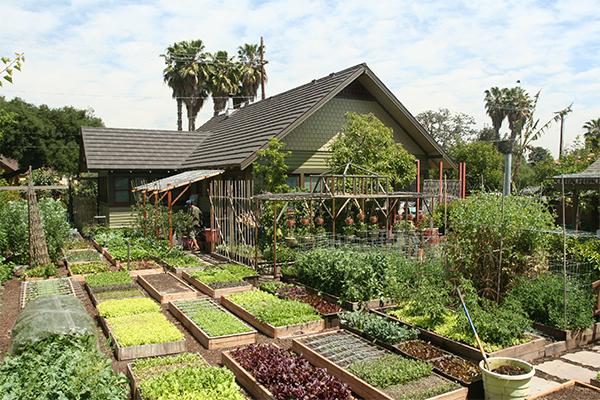 urban-homestead-backyard.jpg